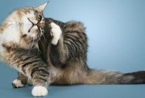 Cat scratching her itch