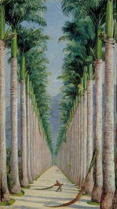 Avenue of Royal Palms at Botafogo, Brazil