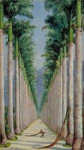 Avenue of Royal Palms at Botafogo, Brazil