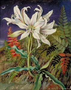 Night-Flowering Lily and Ferns, Jamaica